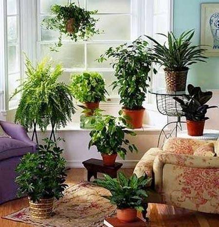 عوامل موثر در نگهداری گیاهان آپارتمانی