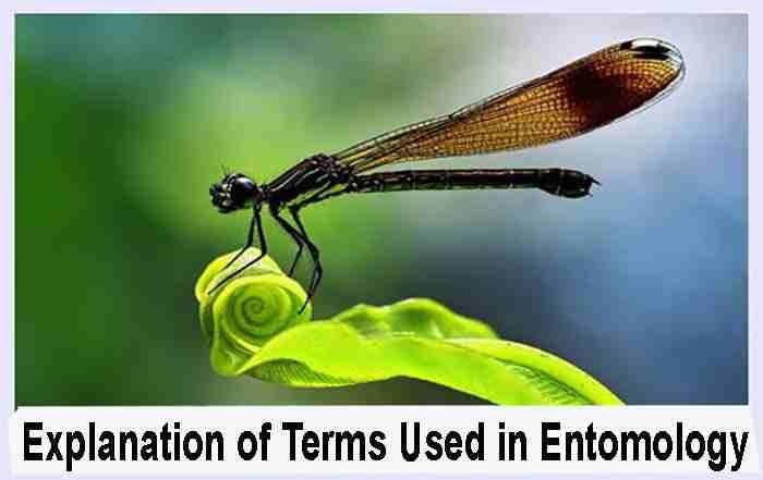دانلود دیکشنری حشره شناسی Explanation of Terms Used in Entomology