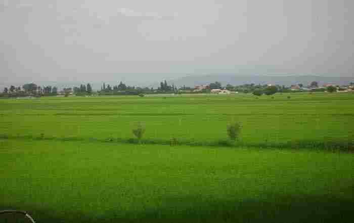 نقش آب در زراعت برنج و استفاده بهینه از آن