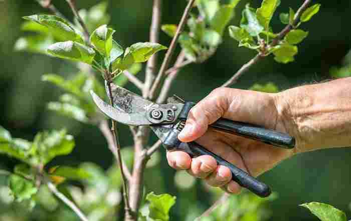 کلیپ آموزشی هرس درختان سیب