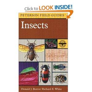 دانلود کتاب راهنمای حشرات نوشته  A Field Guide to Insects