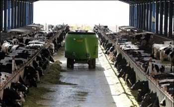 راهنمای پرورش گاو به روش فری استال
