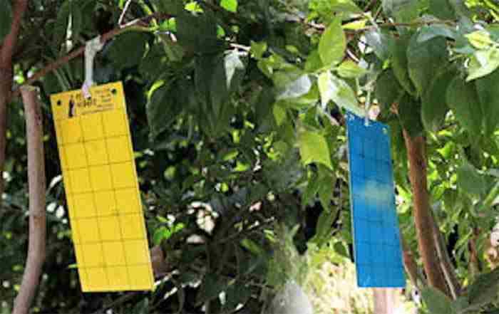 ارزیابی تله های مختلف رنگی