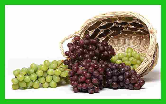 کاشت انگور