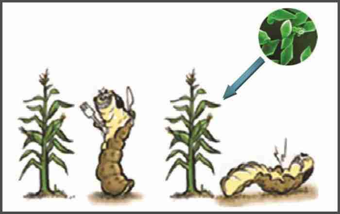 ضرورت کشت بدون شخم در زراعت دیم