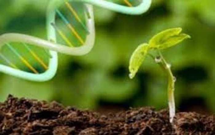 گیاهان تراریخته ، بیوتکنولوژی ، محیط زیست