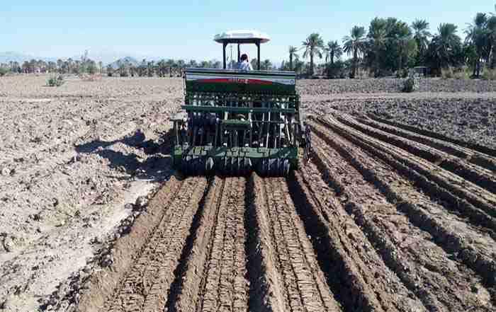مدیریت تولید گندم در شرایط شور