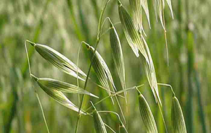 دانلود مقاله کشاورزی ( بخش پنجم )