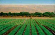 مدیریت علفهای هرز در مزارع ارگانیک