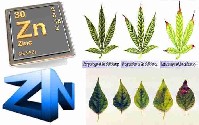 نقش عنصر روی در گیاهان