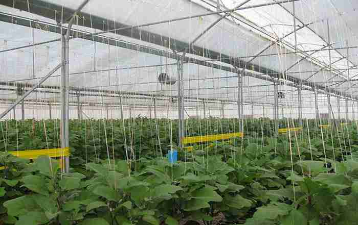 مبانی پیشگیری از خسارت آفات در گلخانه