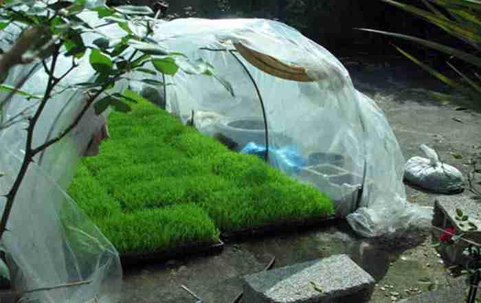 خزانه برنج و تولید نشا شالی