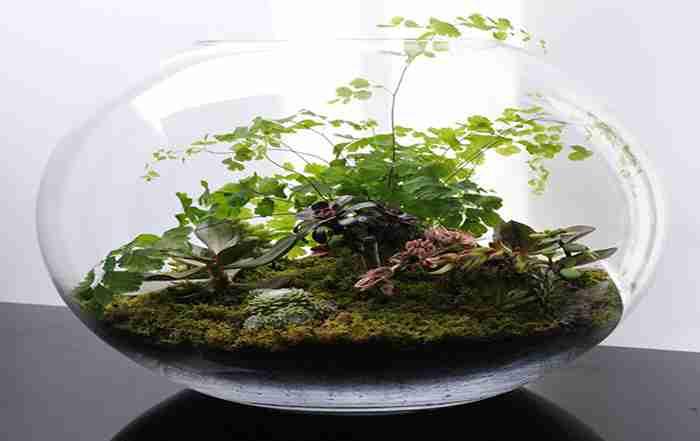 تراریوم ( باغهای درون شیشه ای )