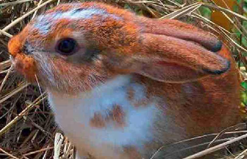 راهنمای نگهداری خرگوش