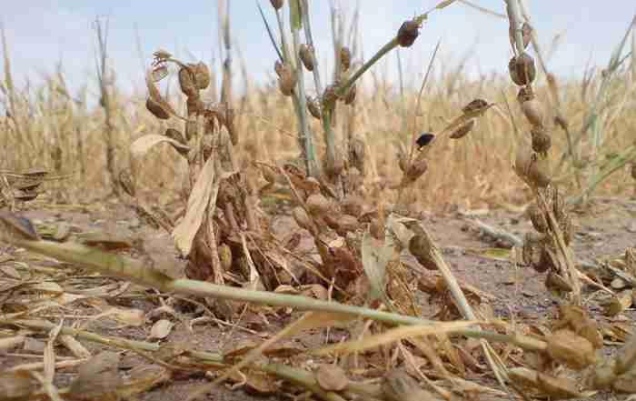 کنترل زیستی سن گندم در مکان های زمستان گذران