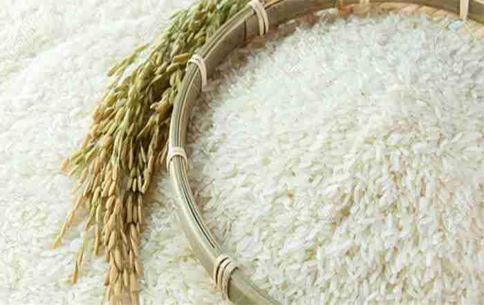 تولید و کاشت برنج در کشاورزی پایدار