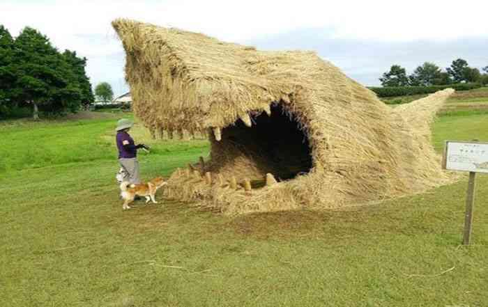 مدیریت شالی پس از برداشت برنج ( قسمت اول )