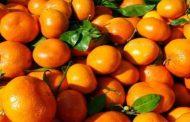 برداشت , انبارداری و عرضه نارنگی