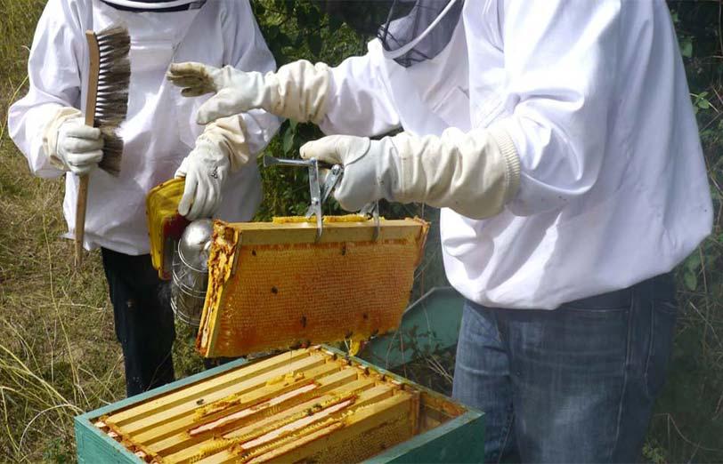 ساختمان کندو و لوازم مورد نیاز زنبورداری