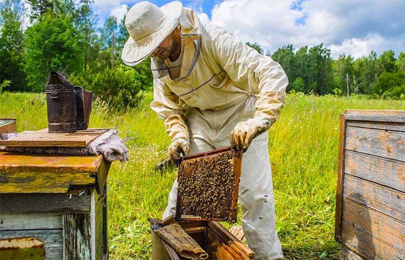 عوامل مهم در پرورش و نگهداری زنبور عسل