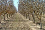 مدیریت باغ پسته در فصل های مختلف سال