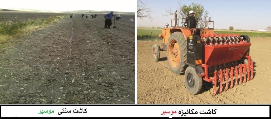روش های کاشت موسیر و استفاده از ادوات در زراعت موسیر