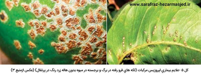 تشابه علایم بیماری لپروزیس مرکبات (لکه های فرو رفته در برگ و برجسته در میوه بدون هاله زرد رنگ در پرتقال) با بیماری شانکر باکتریایی مرکبات