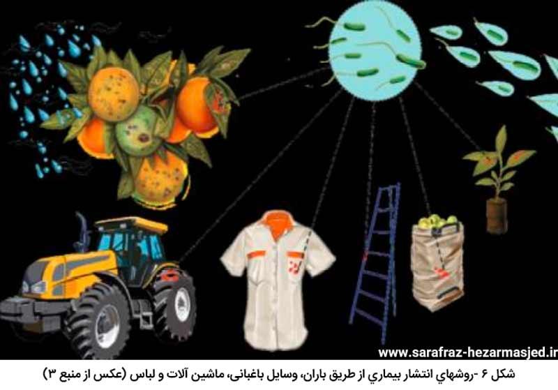 روشهای انتشار Xanthomonas citri subsp.citri عامل بیماری شانکر مرکبات از طریق باران، وسایل باغبانی، ماشین آلات و لباس