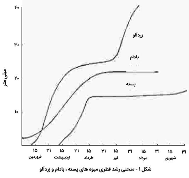 منحنی رشد قطری میوه ها در بادام پسته و زرد الو که در سال آوری پیته موثر است