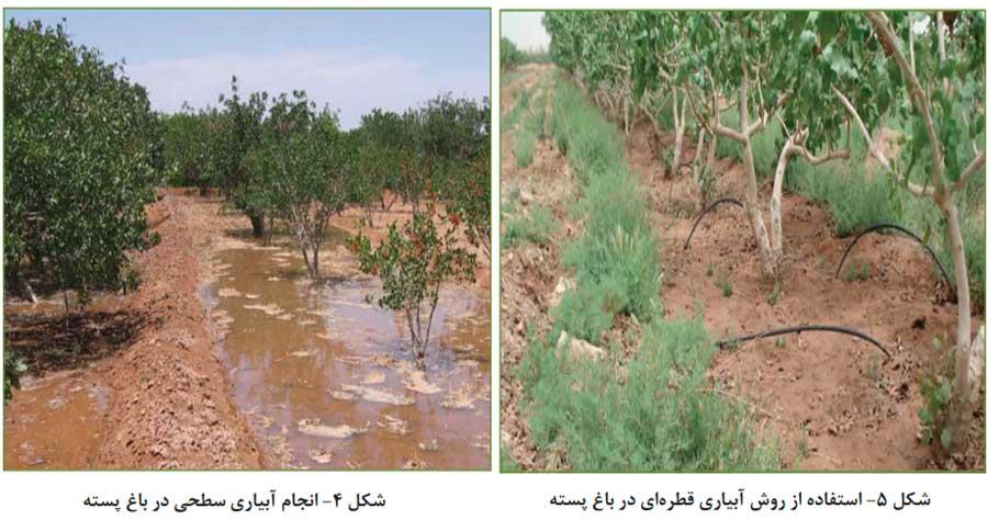 روش آبیاری قطره ای و غرقابی جهت برنامه ریزی آبیاری باغات پسته
