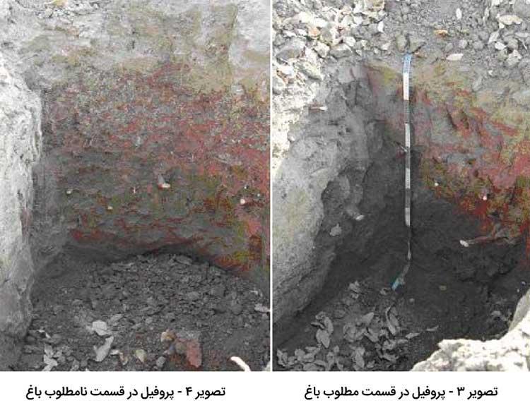 حفر پروفیل برای بررسی خصوصیات خاک باغ پسته