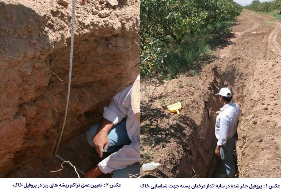 حفر پروفیل جهت مشاهده لایه های خاک پسته در باغات